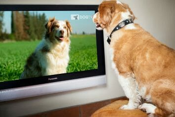 DOGTV Free Preview on Xfinity